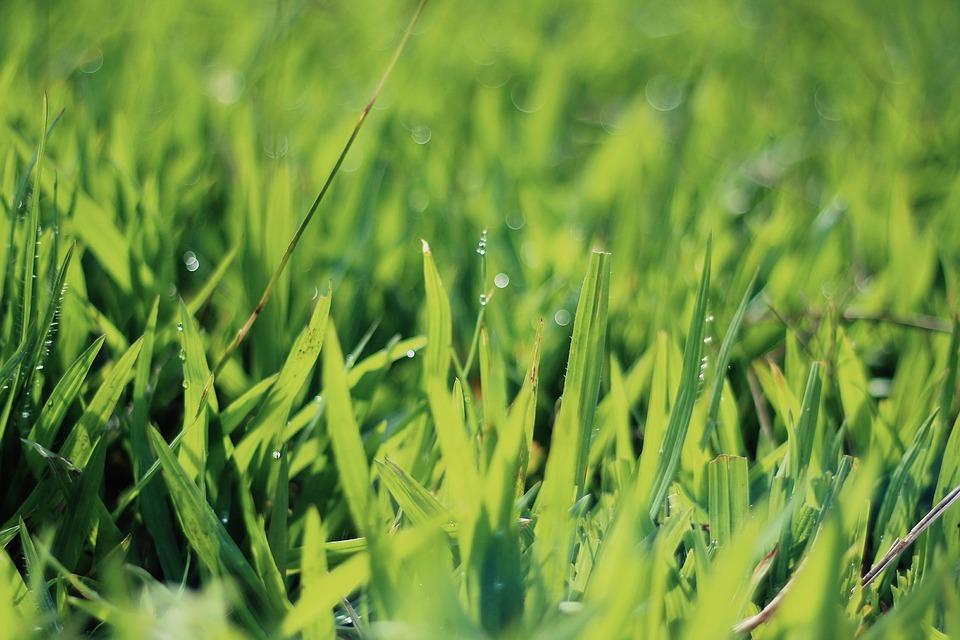 tráva na zahradě